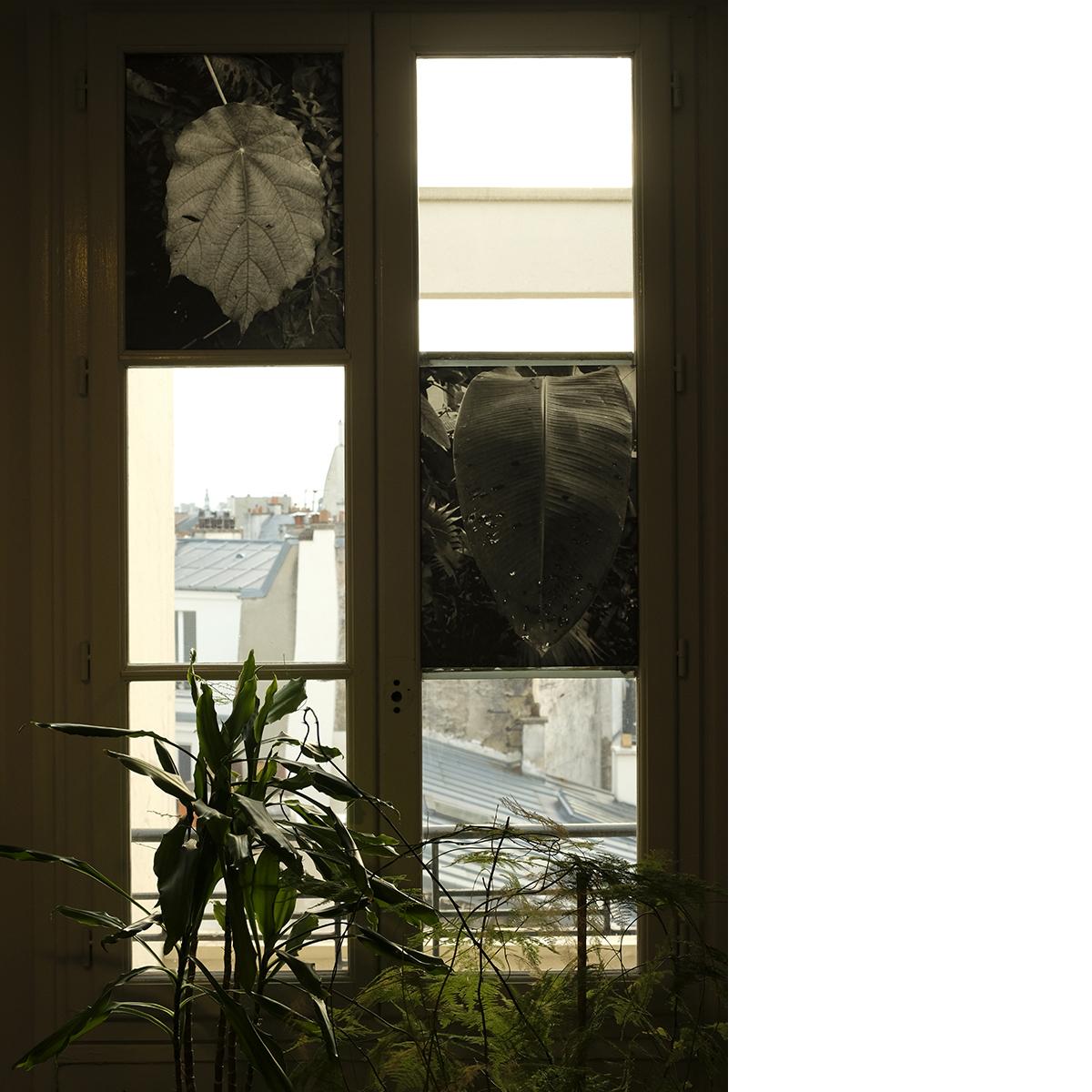 Atelier Phytosphère - <i>Tropicale 1 et 2 le 5 mars 2020 MNHN Paris</i>, 2 x 34 x 47 cm, tirages pigmentaires - Agnès Prévost